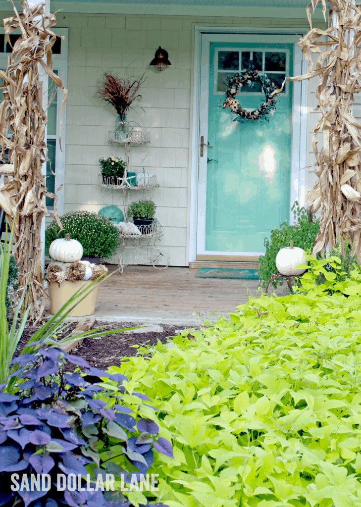 aqua door with white pumpkins