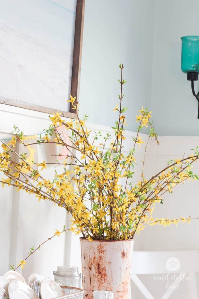 Forsythia in rusty pink sap bucket
