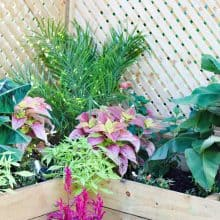 How we built an inexpensive privacy fence with planter