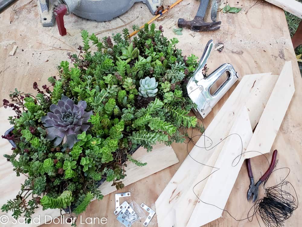 materials needed for easy DIY succulent garden