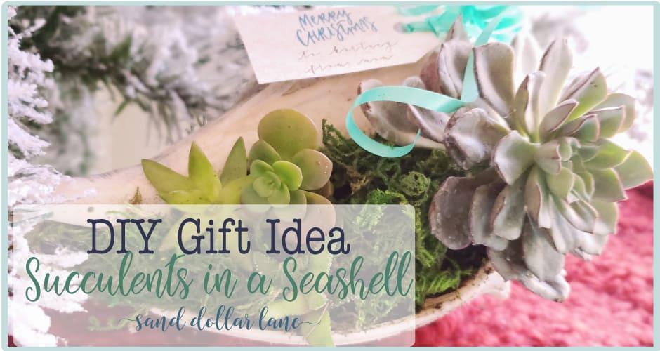 Succulent in Seashell