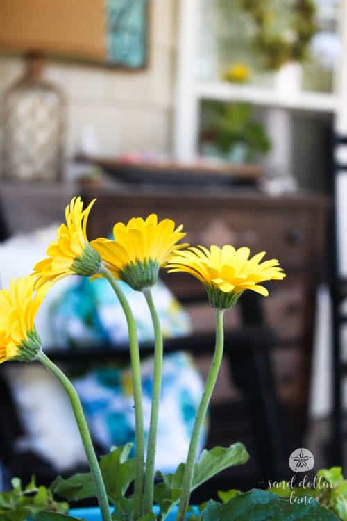 yellow flowers on bright and sunny porch