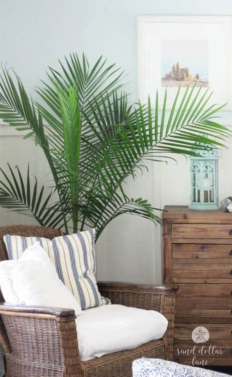 palm tree in coastal living room