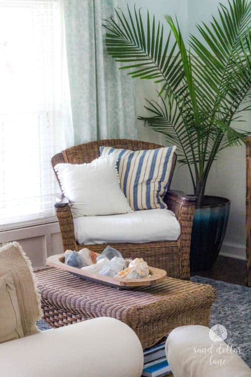 palm tree and wicker chair