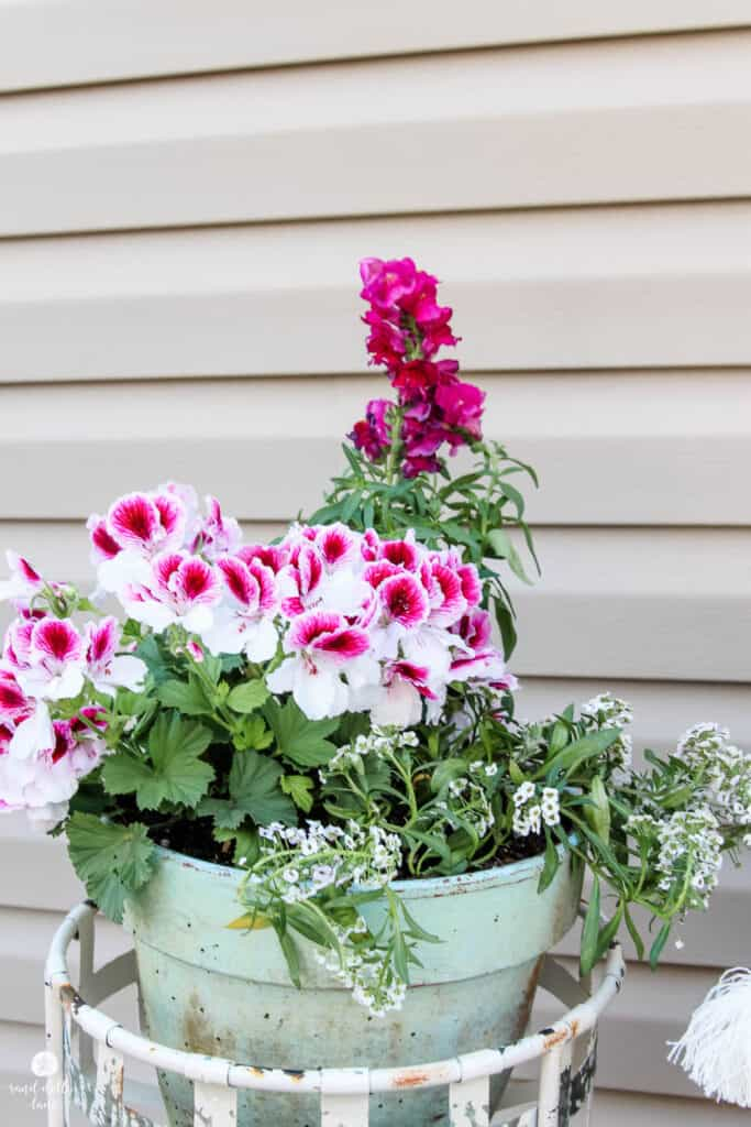 pink and white flowers in pot